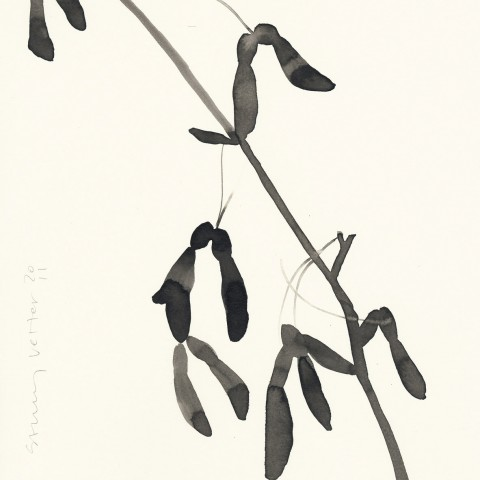 Stacey Vetter - <b>Maple Keys</b>, ink on paper, 10 x 8 inches