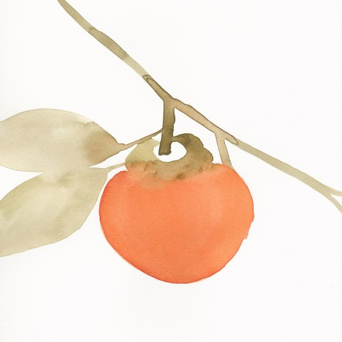 Stacey Vetter - <b>Persimmon</b>, watercolor on paper, 10 x 8 inches